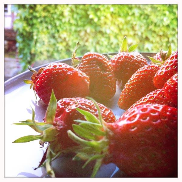 fraises12