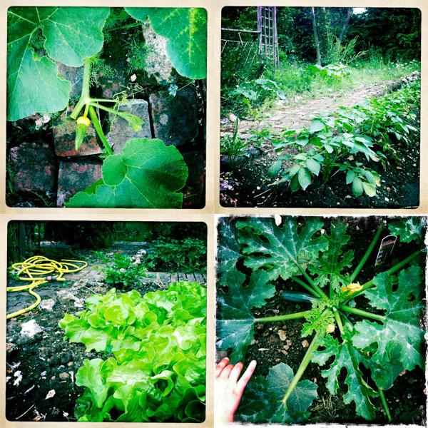 jardin-juin1