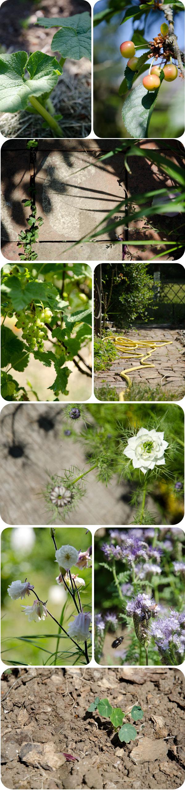 jardin-mai11
